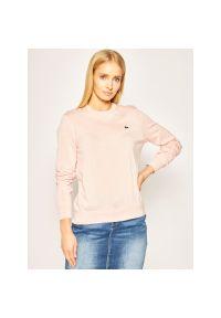 Różowy sweter Lacoste
