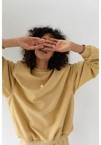Marsala - Bluza damska z poduszkami na ramionach w kolorze HAZELNUT - AMBIENT BY MARSALA. Materiał: dresówka, dzianina, bawełna, elastan