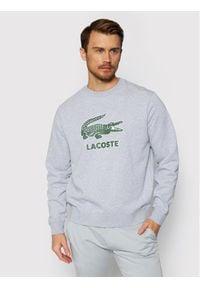 Lacoste Bluza SH0065 Szary Regular Fit. Kolor: szary
