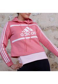Bluza sportowa Adidas krótka, na fitness i siłownię, z kapturem