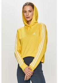 Żółta bluza Adidas z aplikacjami, z kapturem, długa, z długim rękawem
