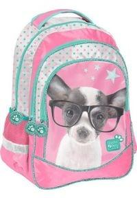 Paso Plecak szkolny Studio Pets Piesek w okularach różowy (PTD-181). Kolor: różowy