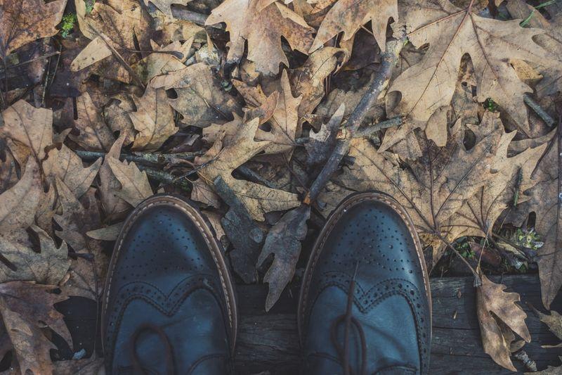 Jesień u Twych stóp