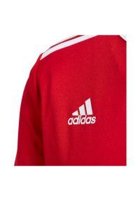 Adidas - Koszulka piłkarska dla dzieci adidas Entrada 18 Jr CF1050. Materiał: dzianina, skóra, materiał, poliester. Technologia: ClimaLite (Adidas). Wzór: ze splotem, paski. Sport: piłka nożna