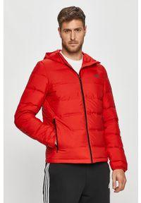 Czerwona kurtka adidas Performance na co dzień, casualowa, z kapturem